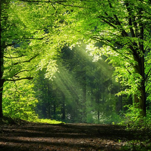 Panoramic forest scenery with green branches shaping a natural archway